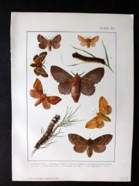Kappel & Kirby C1895 Butterflies and Moths Print. Gastropacha, Lasiocampa 20